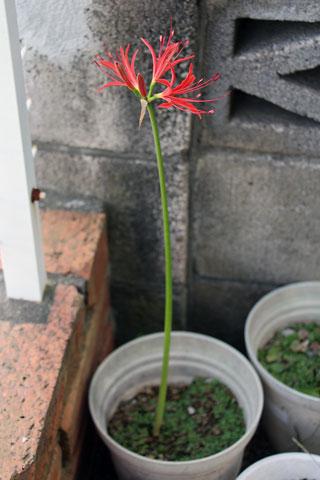 f:id:takahikonojima:20140927103245j:plain