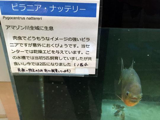 f:id:takahikonojima:20150821182855j:plain
