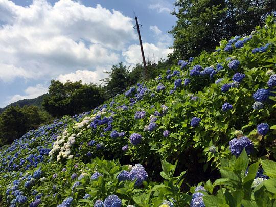 f:id:takahikonojima:20160626181101j:plain