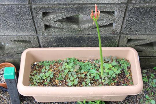 f:id:takahikonojima:20161001171025j:plain