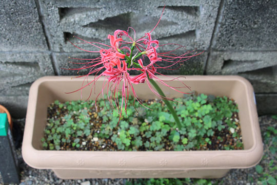 f:id:takahikonojima:20161001171141j:plain