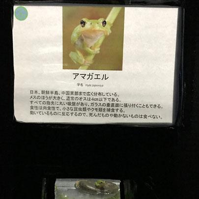 f:id:takahikonojima:20161108173400j:plain