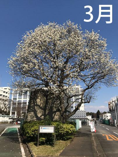 f:id:takahikonojima:20170331225021j:plain
