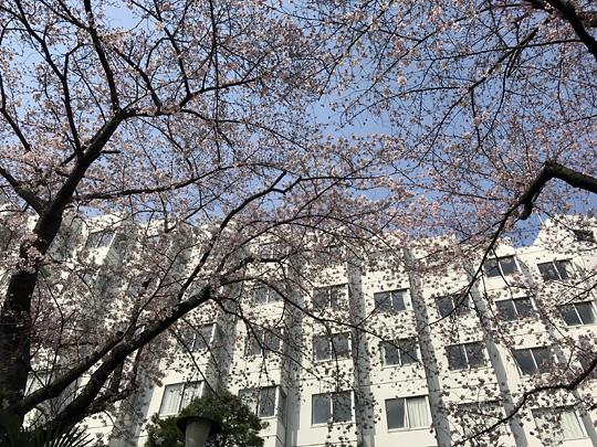 f:id:takahikonojima:20170407182955j:plain