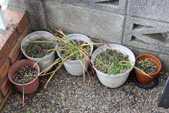 f:id:takahikonojima:20170520202127j:plain