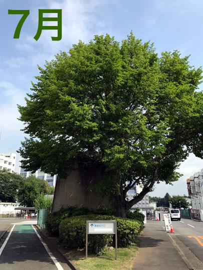 f:id:takahikonojima:20170731152453j:plain
