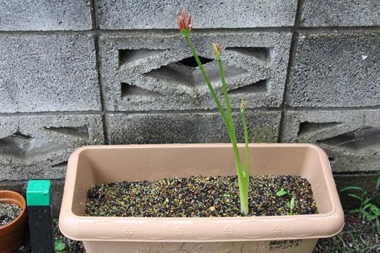 f:id:takahikonojima:20170921175451j:plain