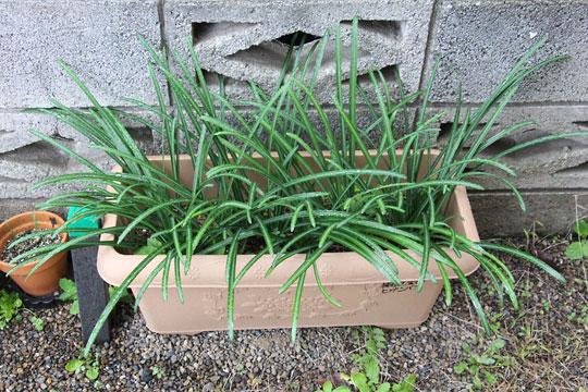 f:id:takahikonojima:20171203102324j:plain