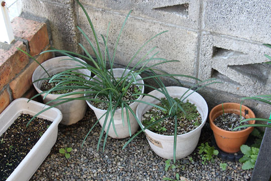 f:id:takahikonojima:20171217200058j:plain