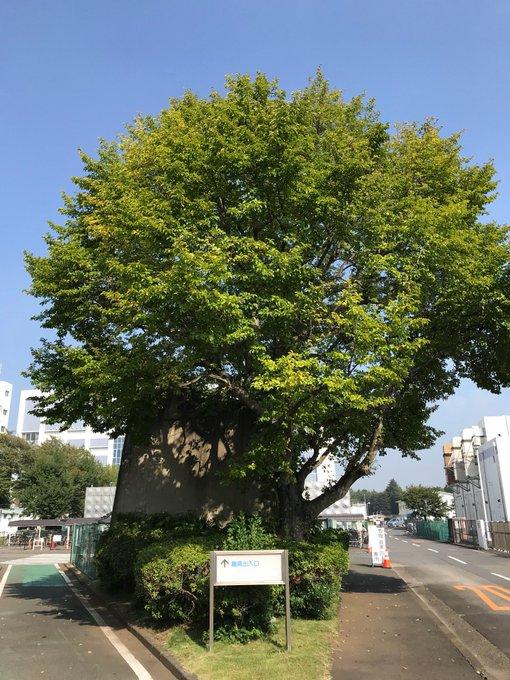 f:id:takahikonojima:20171228174713j:plain