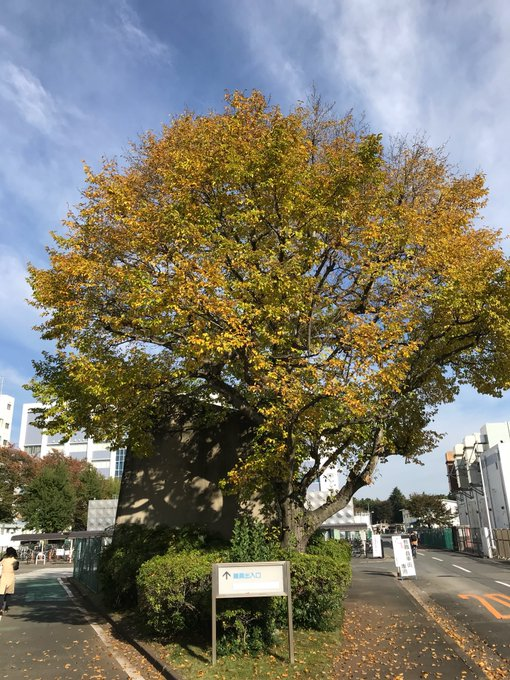 f:id:takahikonojima:20171228174819j:plain