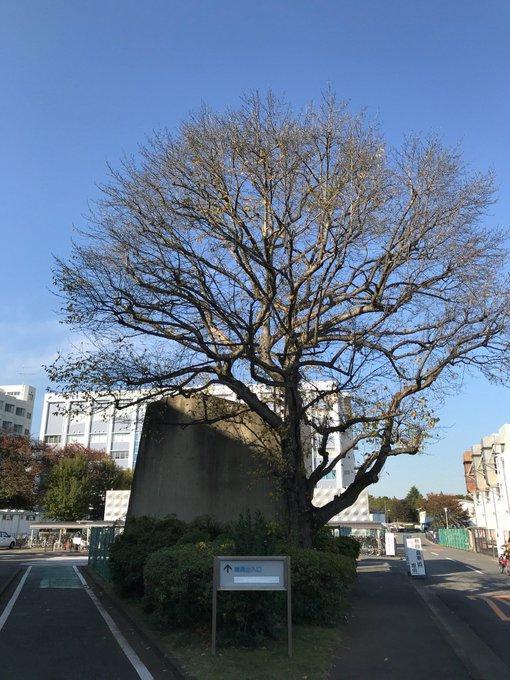 f:id:takahikonojima:20171228175117j:plain