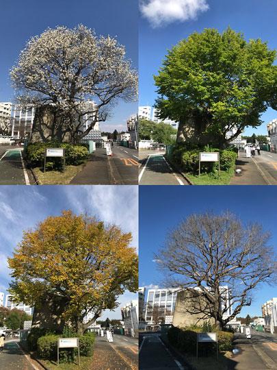 f:id:takahikonojima:20171228181021j:plain