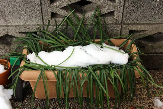 f:id:takahikonojima:20180128185209j:plain