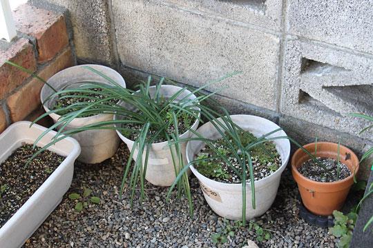 f:id:takahikonojima:20180213131238j:plain