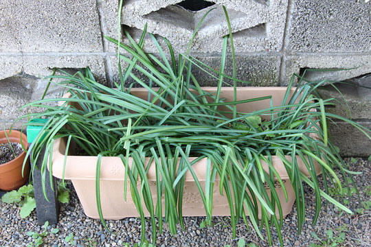 f:id:takahikonojima:20180318153245j:plain