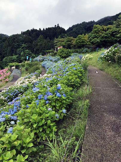 f:id:takahikonojima:20180815193951j:plain