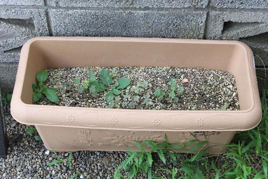 f:id:takahikonojima:20180825192107j:plain