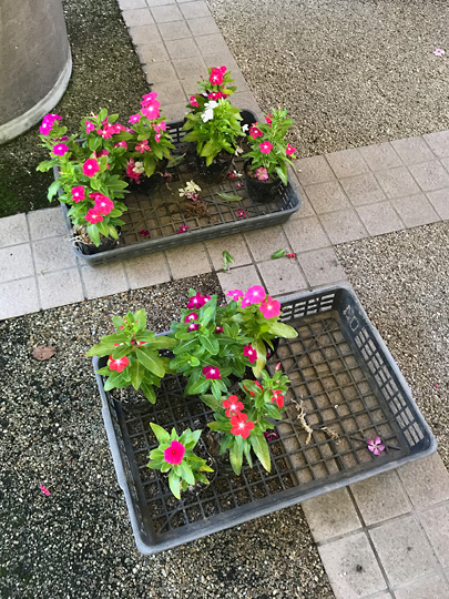 f:id:takahikonojima:20180831174117j:plain