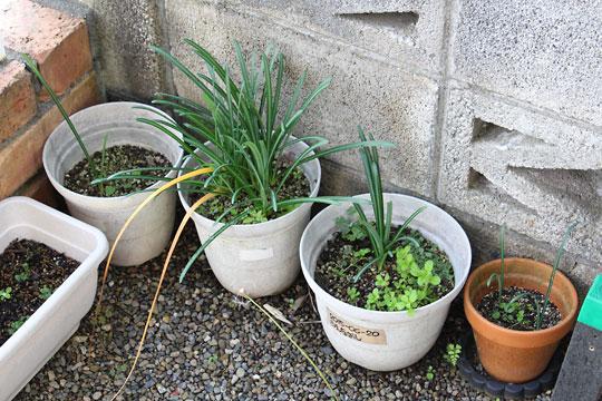 f:id:takahikonojima:20181025124350j:plain