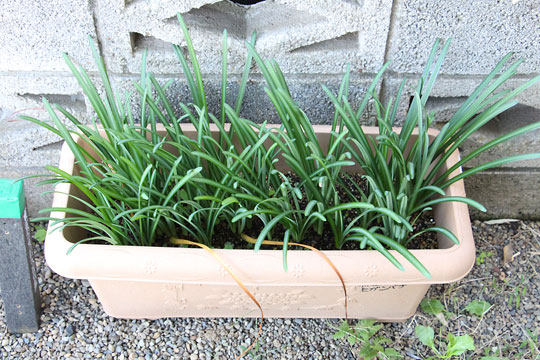 f:id:takahikonojima:20181028174158j:plain