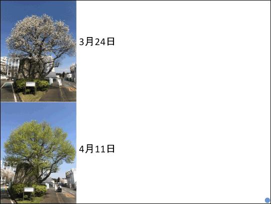 f:id:takahikonojima:20181223141133p:plain