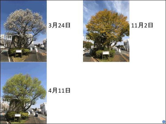 f:id:takahikonojima:20181223141141p:plain