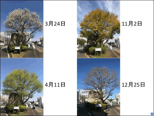 f:id:takahikonojima:20181223141149p:plain