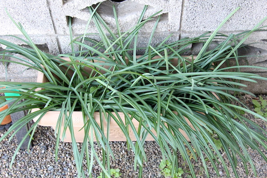 f:id:takahikonojima:20181230081851j:plain