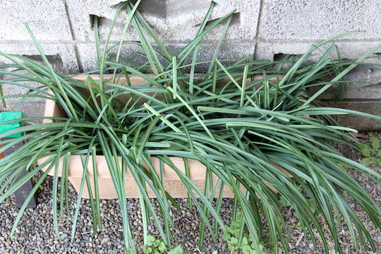 f:id:takahikonojima:20190114082140j:plain