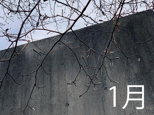 f:id:takahikonojima:20190201092207j:plain