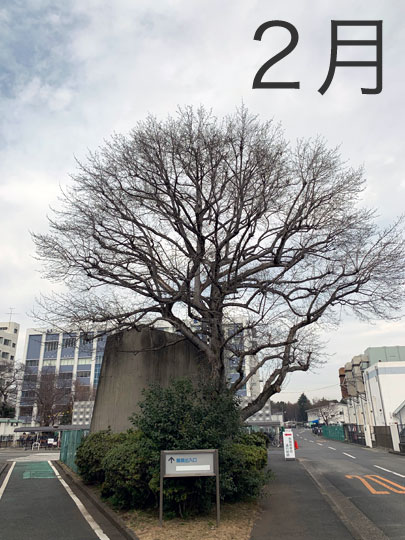 f:id:takahikonojima:20190228155930j:plain