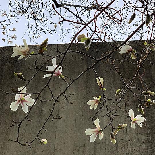 f:id:takahikonojima:20190422163155j:plain
