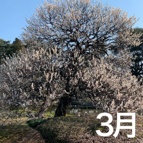 f:id:takahikonojima:20190501090416j:plain