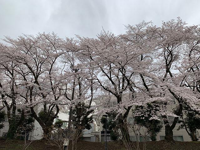 f:id:takahikonojima:20190501114540j:plain