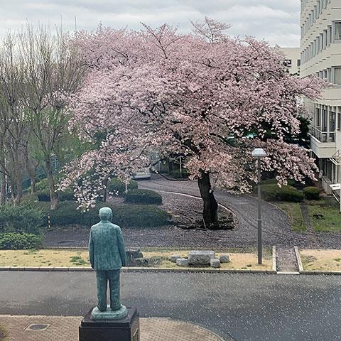 f:id:takahikonojima:20190501114707j:plain