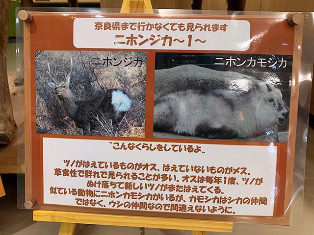 f:id:takahikonojima:20190903172933j:plain