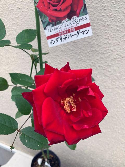 f:id:takahikonojima:20191109192143j:plain