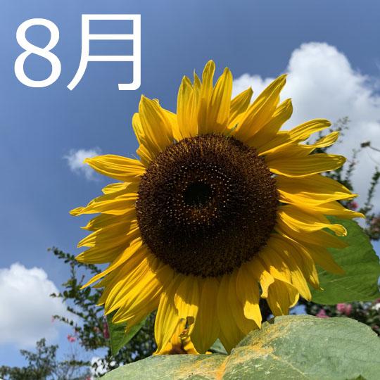 f:id:takahikonojima:20200801095100j:plain