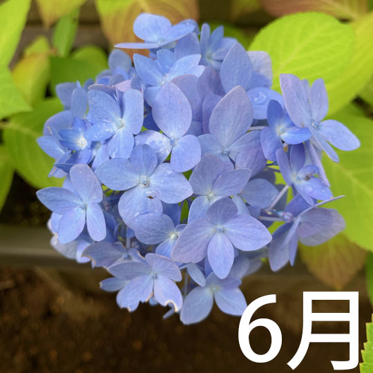 f:id:takahikonojima:20210614105513j:plain