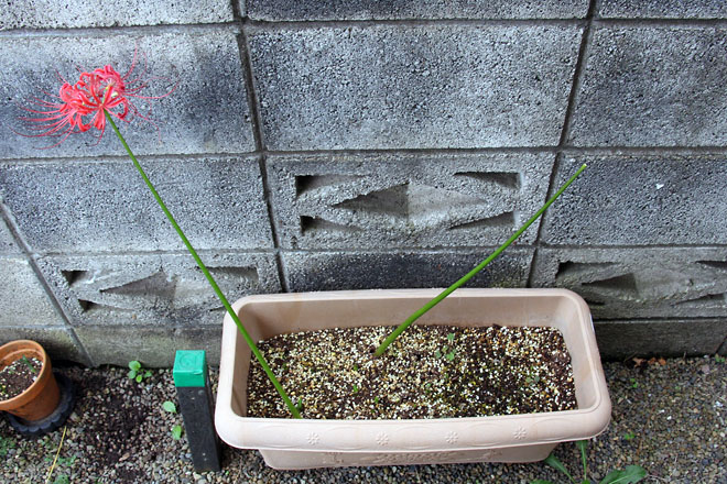 f:id:takahikonojima:20210927065650j:plain