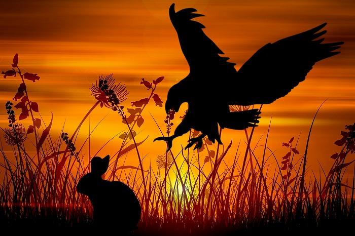 ワラダ猟について