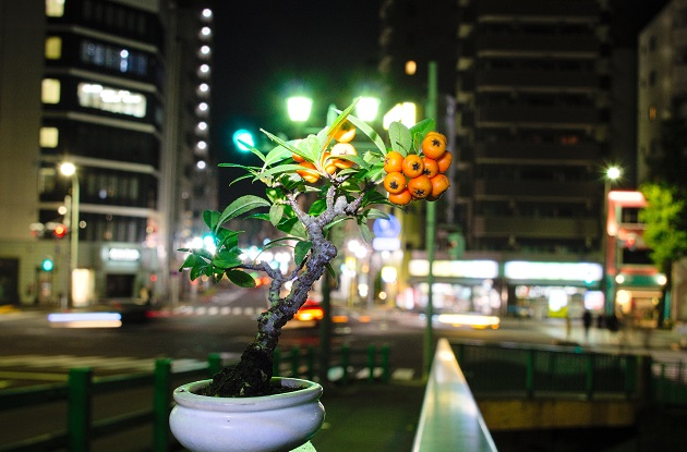 f:id:takahiro91:20161127135411j:plain