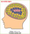 ムネオの脳内