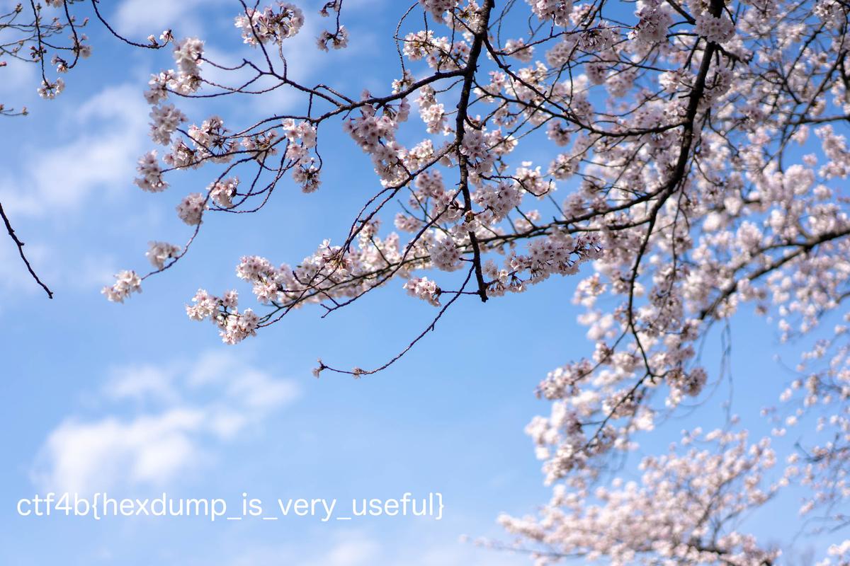 f:id:takahoyo:20190331150520j:plain