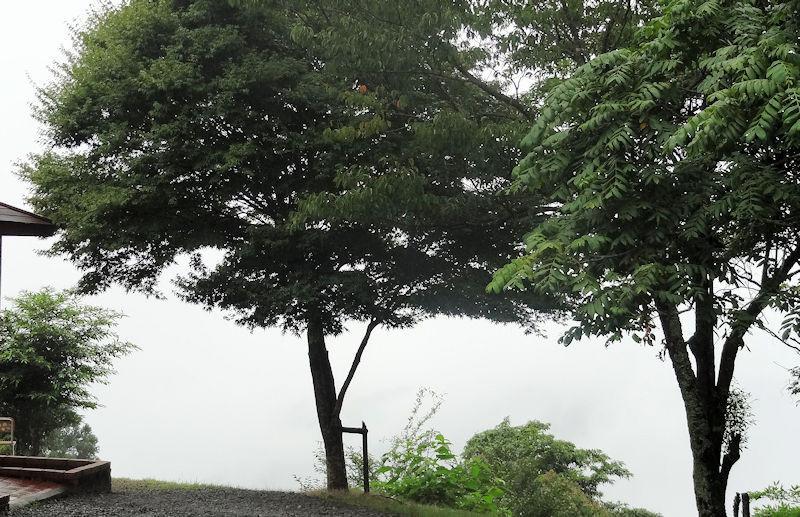f:id:takajun7777:20170816161536j:image