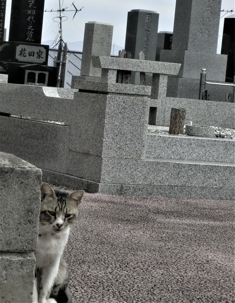 f:id:takakotakakosun:20181110224539j:plain