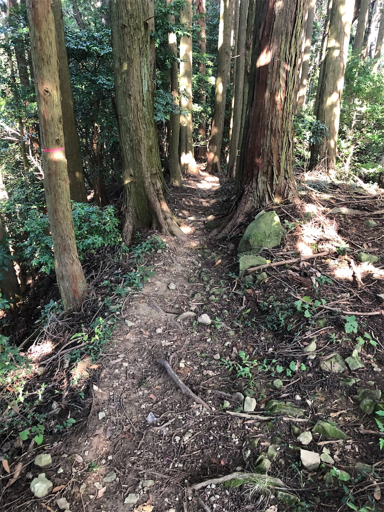 f:id:takakusaya-man:20191017180333j:image