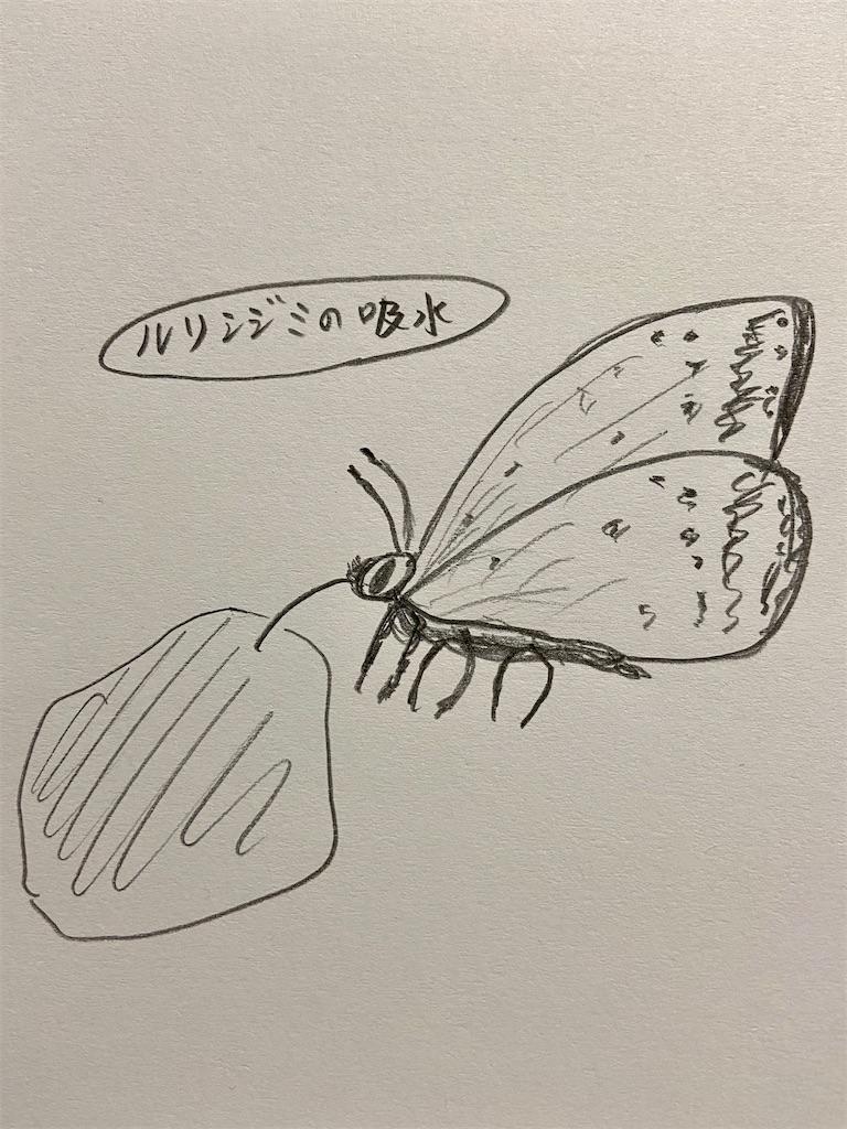 f:id:takakusaya-man:20210417193642j:image