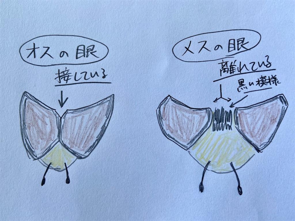 f:id:takakusaya-man:20210418140627j:image